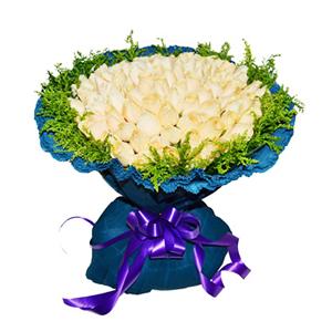 鲜花/冬日恋歌:66枝香槟玫瑰 包 装:蓝色卷边纸包装,紫色丝带束