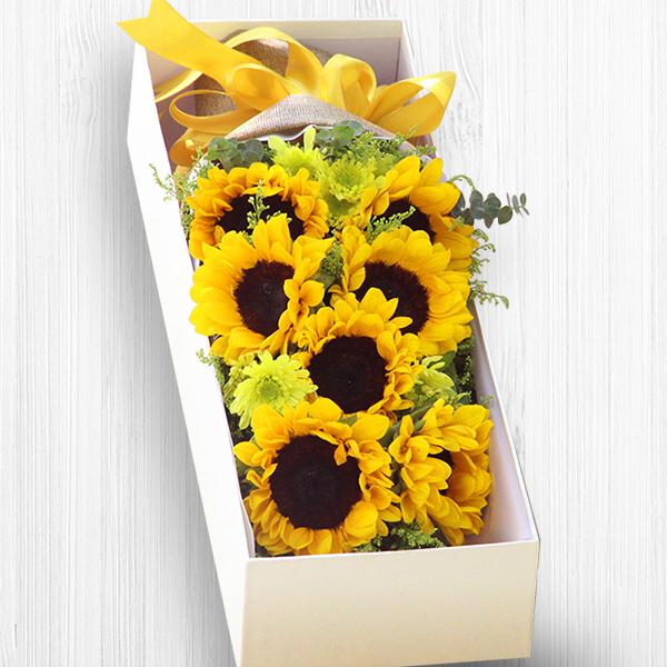 鲜花/恩重如山:九支向日葵精美礼盒 花 语:我明白你深沉目光背后所