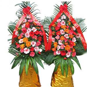 商业用花/财源广进:各种扶郎花,巴西叶、 散尾叶、绿叶搭配 花 语:财
