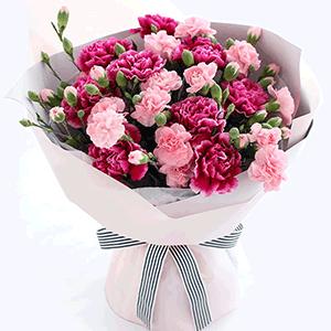 鲜花/典雅的母亲:10枝粉色康乃馨 9枝紫色康乃馨,紫康缺货的情况下会
