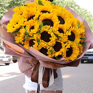 鲜花/暖阳春草:33枝向日葵 花 语:猝不及防闯入你的笑颜