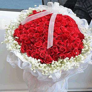 鲜花/柔情蜜意:66枝红玫瑰 花 语:只要你一直在我身边,其他东西